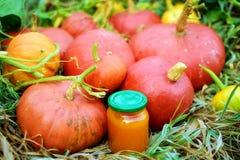 Pumpkins. Close up of fresh organic pumpkins and jam from pumpkins Stock Image