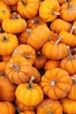 Pumpkins Close Up. Lots of small squash, pumpkins,  in a pile, close up Royalty Free Stock Photo