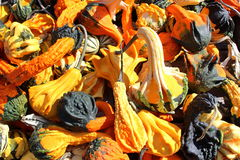 Pumpkins 1 Royalty Free Stock Photos