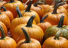 Pumpkins Close Up Stock Image
