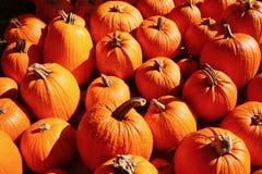 Pumpkins. A close up shot of pumpkins Stock Photography