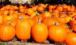 Pumpkins 2. A close up shot of pumpkins Stock Photo