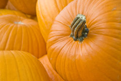 Pumpkins Closeup Stock Image