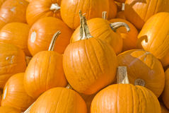 Pumpkins Closeup Stock Images