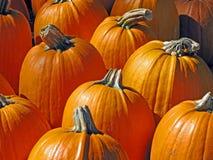 Pumpkins Closeup Stock Images