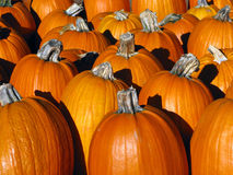 Pumpkins Closeup Stock Photos