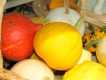 Pumpkins closeup Stock Photos