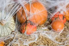 Pumpkins and cobwebs as a decoration for Halloween stock photo