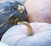 Pumpkins collection Royalty Free Stock Photo