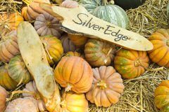 Pumpkins collection in farm Royalty Free Stock Photos