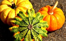 Pumpkins, Colorful, Autumn Royalty Free Stock Photo