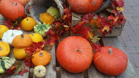 Pumpkins and colorful leaves. Vibrant orange pumpkins and colorful autumn leaves on wooden background Stock Photos
