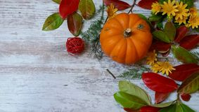 Pumpkins and colorful leaves. Vibrant orange pumpkins and colorful autumn leaves on wooden background Stock Image