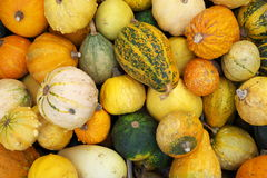 Pumpkins. A colorful mound of small pumpkins featuring different sizes, colors and textures Royalty Free Stock Photo
