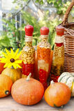 Pumpkins and colorful pickled vegetables in preserving glass Royalty Free Stock Photo