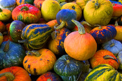 Pumpkins composition. Elaborated still life composition made of colored pumpkins Stock Image