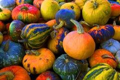 Pumpkins composition Stock Image