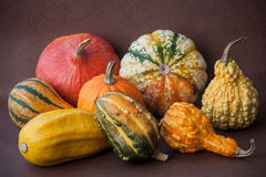 Pumpkins composition. Still life composition of colored pumpkins Royalty Free Stock Images