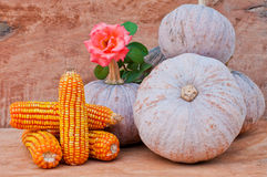 Pumpkins, conr and rose. Rustic autumn still life with mini pumpkins,corn and rose on old wood in background. Macro with shallow dof Stock Image