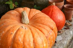 Pumpkins on the coping of a well. In a garden during autumn Stock Photo