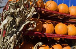 Pumpkins and Corn Husks Fall Decoration Ingredients. Stacks and rows of orange pumpkins with Thanksgiving and Halloween Corn Husk decorations stock images