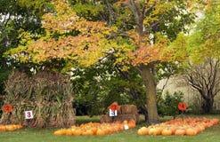 Pumpkins and Corn Stalks Stock Images