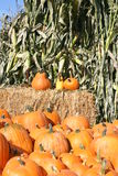 Pumpkins & corn stalks. Pumpkins, corn stalks and hay bale all mean fall is here...halloween's just around the corner Royalty Free Stock Photo