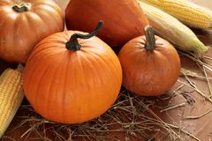 Pumpkins and corns Stock Images