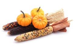 Pumpkins and corns Royalty Free Stock Photo