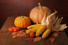Pumpkins, corns and physalis Royalty Free Stock Images