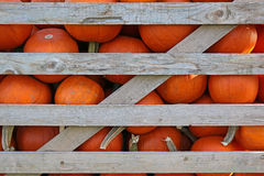 Pumpkins in crate. Orange pumpkins in wood slat crate Stock Photo
