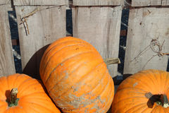 Pumpkins in a crate Stock Images