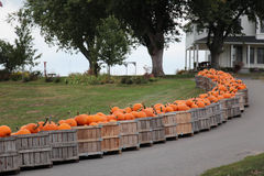 Pumpkins in a crate. Wooden crates of fall pumpkins lining the driveway Stock Images