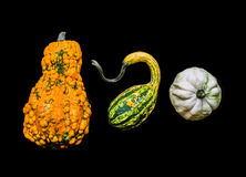 Pumpkins of crazy shapes on black Stock Photo