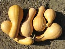 Pumpkins crop Stock Photography