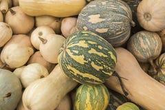 Pumpkins, Cucurbita argyrosperma, moschata, Butternut, maxima, c Stock Photos