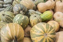 Pumpkins, Cucurbita argyrosperma, moschata, Butternut, maxima, c Stock Photography