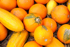 Pumpkins (Cucurbita moschata) Stock Photo