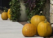 Pumpkins (cucurbita pepo) Stock Photo