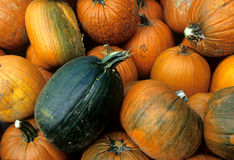 Pumpkins: Dare to Be Different Stock Photos