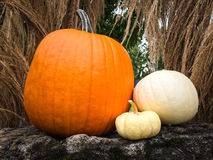 Pumpkins decorating a garden Stock Photography