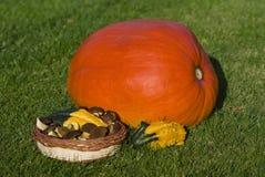 Pumpkins decoration. Autumn decoration with pumpkin and mushroom Royalty Free Stock Photos