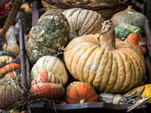 Pumpkins for decoration at Campo dei Fiori, Rome Stock Photo