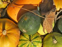 Pumpkins. Decoration with colored ornamental pumpkins Royalty Free Stock Image