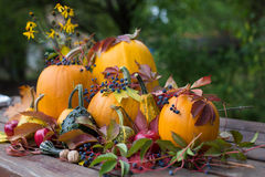Pumpkins decoration Stock Image