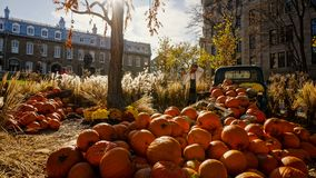 Pumpkins decoration during Halloween in Quebec, Canada. Orange colours stock images