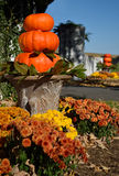 Pumpkins Decorative Assortment Bathing in a Sun Royalty Free Stock Photo