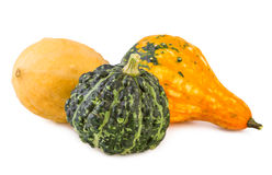 Pumpkins decorative colorful various gourds ornamental assorted Royalty Free Stock Images