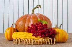 Pumpkins and decorative corns behind rustic wooden Stock Image