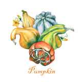 Pumpkins. Decorative pumpkins watercolor painting on white background. Stock Photo